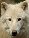 www.eiswolf.net