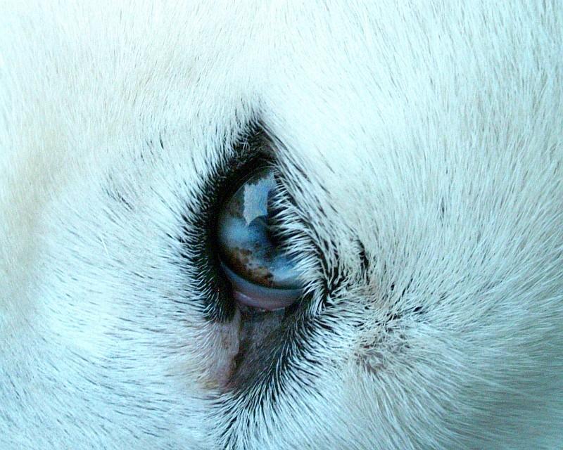 marmoriertes Auge