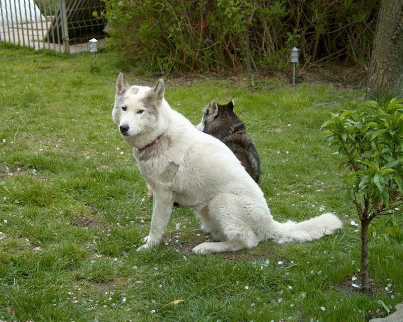 Gipsy und Amy eingespannt